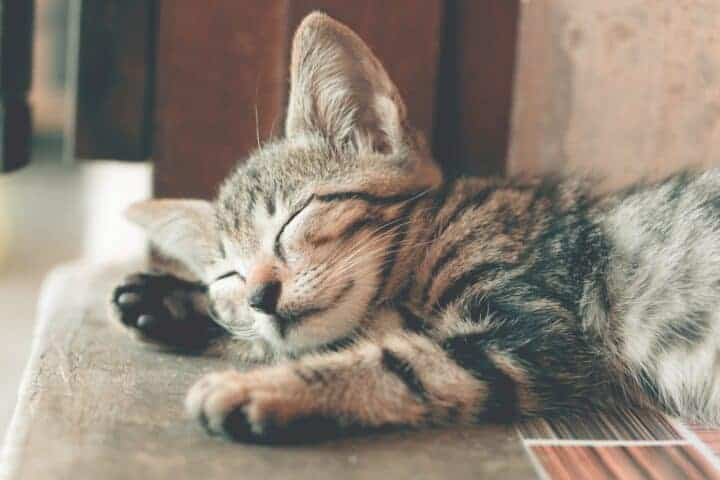 Cat looking peaceful while napping