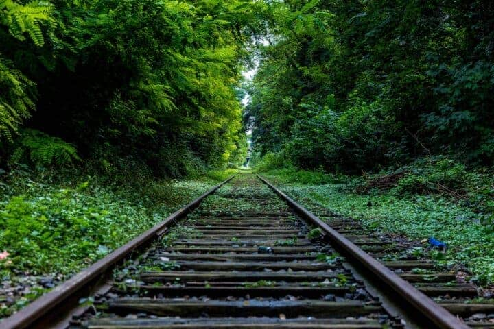 Railroad tracks going through lush green forest