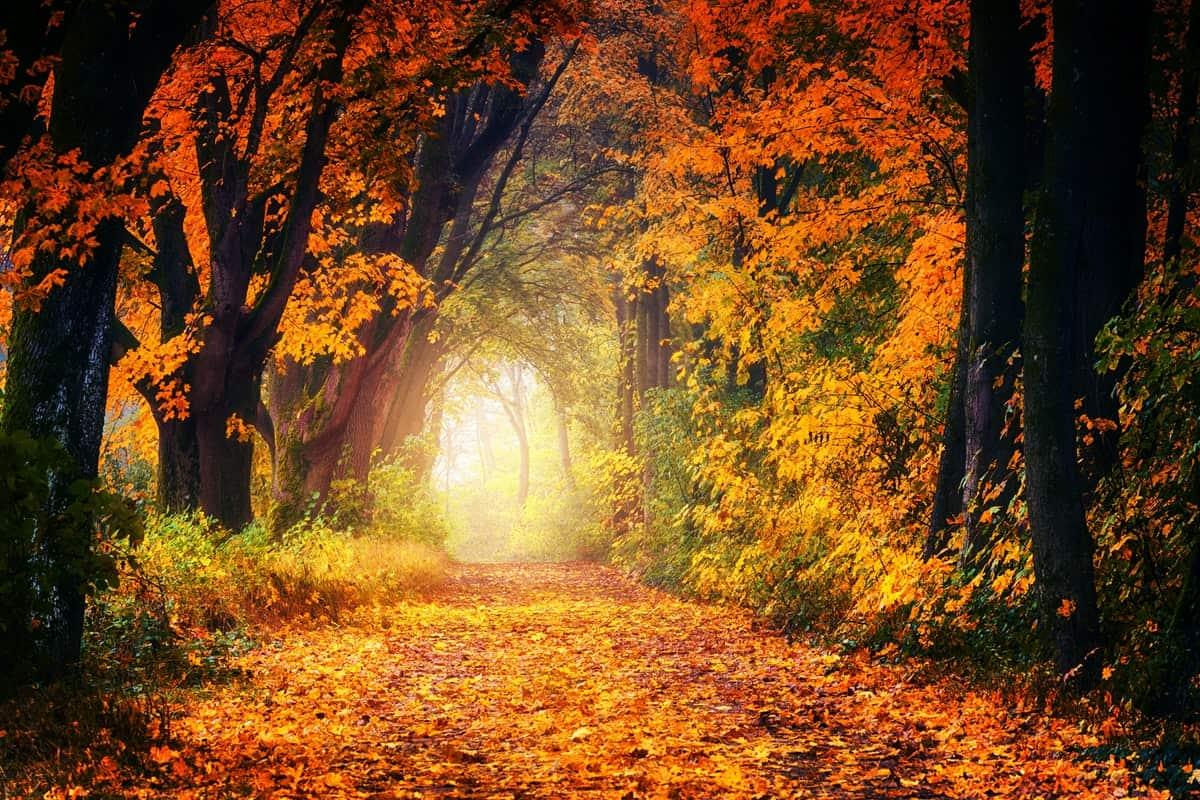 fall leaf tunnel