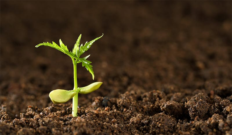 Plant spirit sprouting
